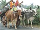 straatbeeld India © Hans de Waard