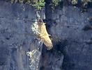 vale gier, Georgië, Blue Elephant, wandelreis