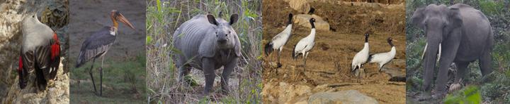 Bhutan, Manas, Blue Elephant, Vogelreis
