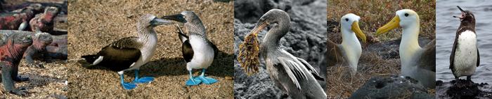 Galapagos, Blue Elephant, Vogelreis
