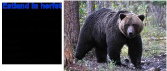 Blue Elephant, vogelreis, natuurreis, beleving, bruine beer, elandbronst, kraanvogel, oeraluil, witrugspecht