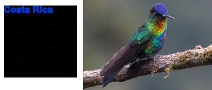 Blue Elephant, vogelreis, birdwatching, Costa Rica, Fiery-throated Hummingbird