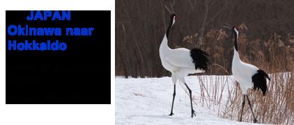 Blue Elephant, vogelreis, birdwatching, Japan, Hokkaido, Okinawa, Japanse kraanvogel, Blakiston's Fish Owl