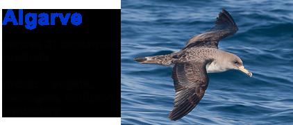 vogelreis, zeezoogdieren, vogels, dolfijnen, Algarve, Blue Elephant