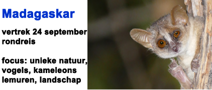 vogelreis, lemuren, halfapen, vogels, Madagaskar, Madagascar, , kameleons, Blue Elephant