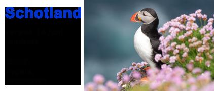 vogelreis, zeezoogdieren, vogels, dolfijnen, Schotland, papegaaiduiker, alken, zeekoet, Blue Elephant
