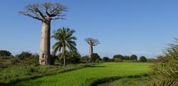 mada-landschap