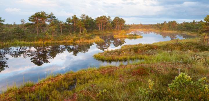 hoogveen, estland, Estonia, Blue Elephant