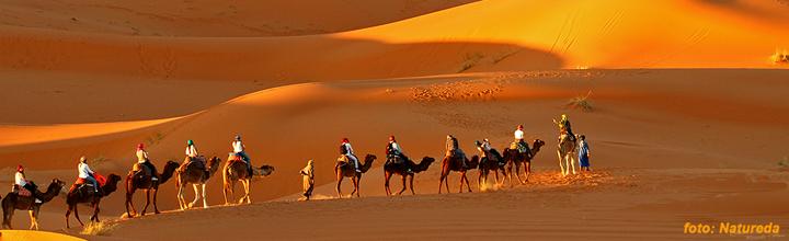 Woestijnoehoe, Blue Elephant, vogelreis, Marokko
