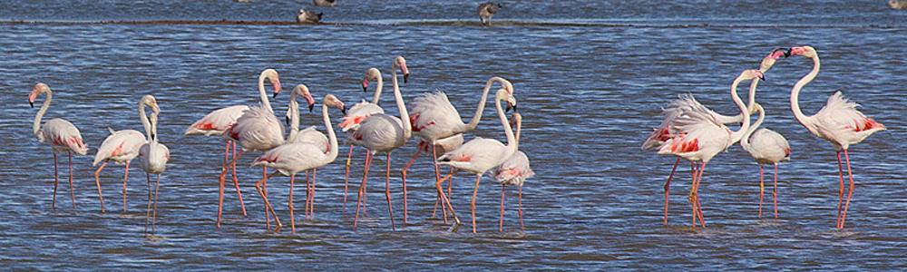 Blue Elephant, flamingo, fotografiereis, fotoreis, vogelreis, natuurreis