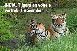 India, Blue Elephant, vogels, tijger, Bharatpur, Bandhavgarh, Pench, Kanha, vogels, vogelreis, natuurreis, Ledenreis Vogelbescherming