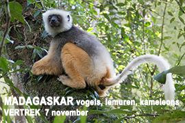 Madagaskar, Madagascar, Blue Elephant, lemuren, kameleons, vogels, vogelreis, natuurreis, Ledenreis Vogelbescherming