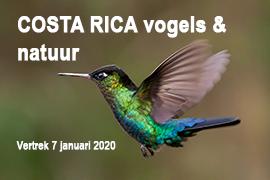Costa Rica, Blue Elephant, vogels, vogelreis, kolibries, quetzal, natuurreis, Ledenreis Vogelbescherming