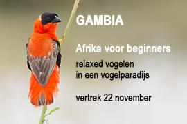 Gambia, Blue Elephant, vogels, vogelreis, leeuwen, natuurreis, Ledenreis Vogelbescherming