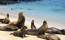 Galápagos cruise, landschildpad, landleguaan, zeeleguaan, fregatvogels, Ecuador, Galápagos-eilanden, Isla Isabela,north seymour