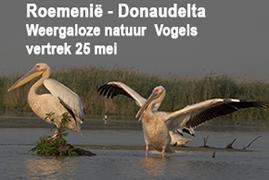 Blue elephant, vogelreis, natuurreis, Donaudelta, Donau, Roemenië, pelikaan, kroeskoppelikaan, grote karekiet